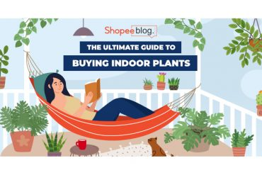 the ultimate guide to buying indoor plants