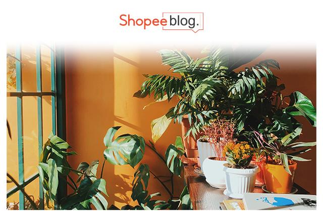 sunlight for indoor plants