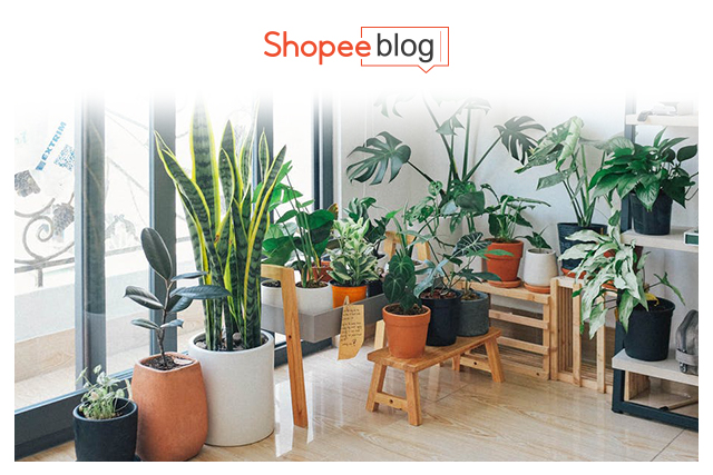 Cope With Stress Houseplants