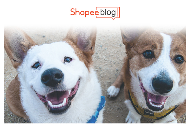 two smiling dogs