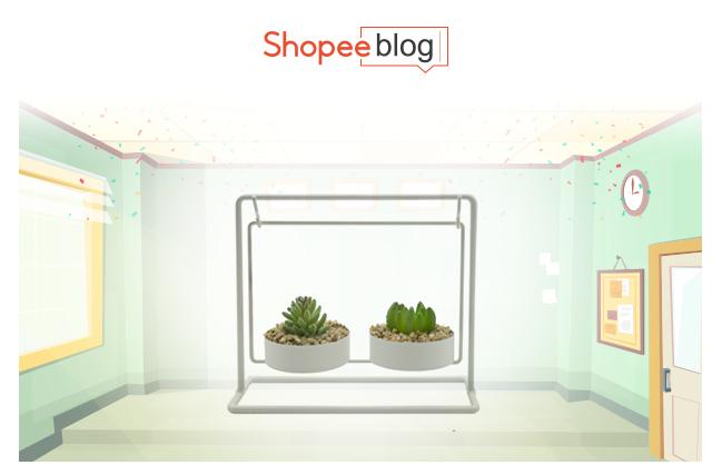 Succulent display for desk